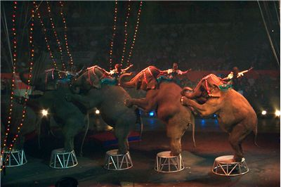 Picture Of Barnum And Bailey Circus