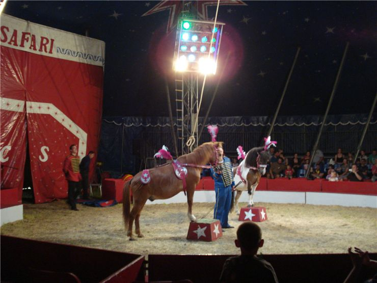 Picture Of Circus Horse Act At Cakovac Circus