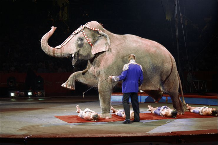 Picture Of Elephant And Circus Girls