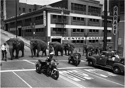 Picture Of Elephants From Cole Brothers Circus 1953