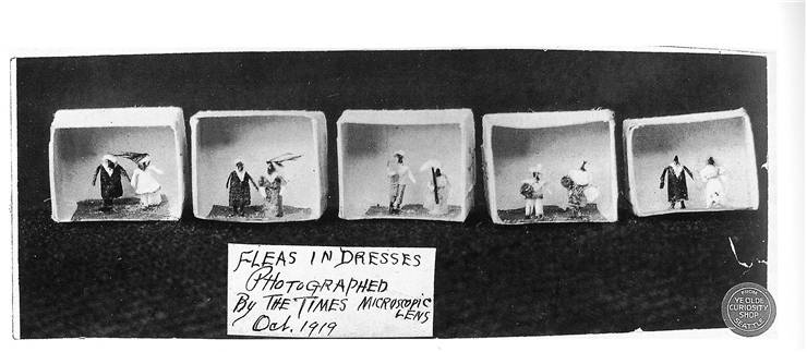 Picture Of Fleas In Dresses At Ye Olde Curiosity Shop 1919