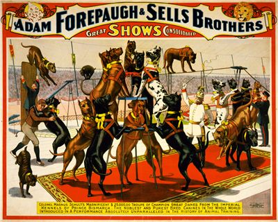 Picture Of Sells Brothers Circus With Great Danes 1898